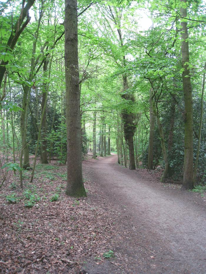 Pad in het Haagse Bos